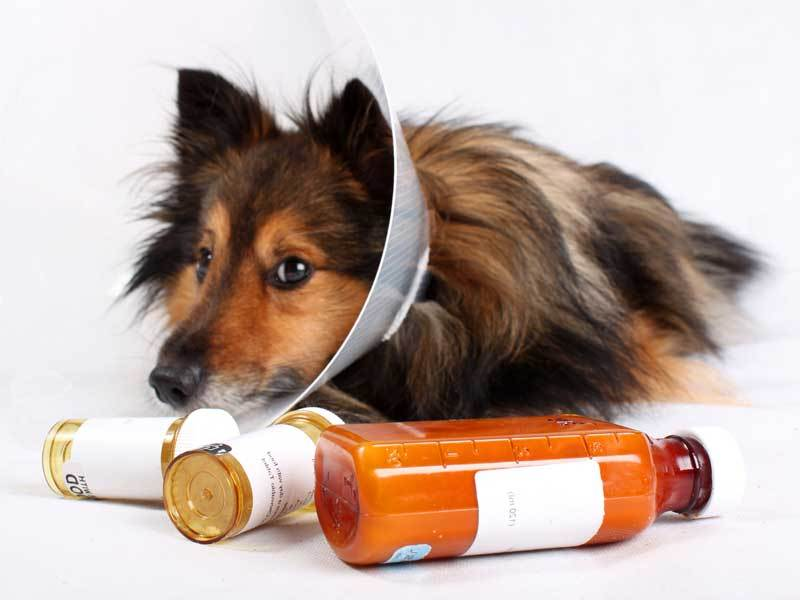 Приём лекарств – довольно неприятная процедура, но порой без неё не обойтись