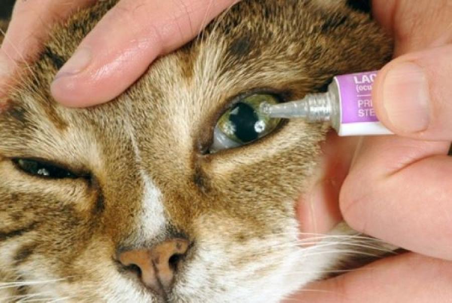 При закапывании не задевайте пипеткой глаз животного