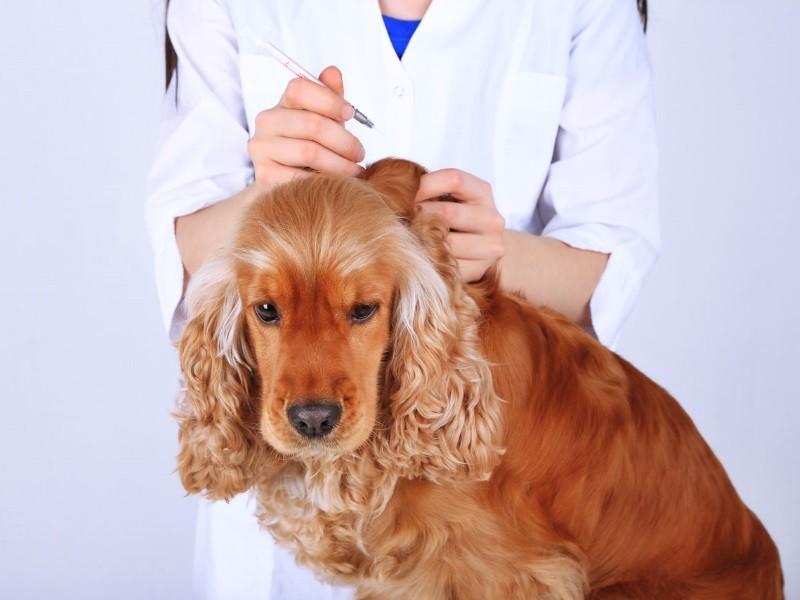 При наличии у питомца противопоказаний, обработка иногда осуществляется ветеринаром в пределах клиники