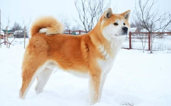 При условии наличия теплого места и сытной пищи собака может жить даже на морозе