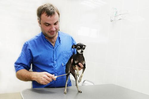 Проверка рефлексов у собак