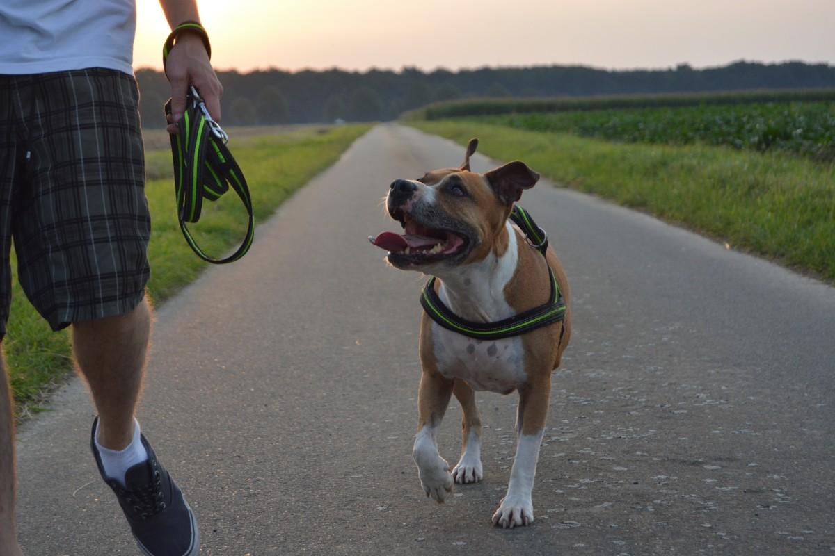 Прогулки - неоходимая часть процесса воспитания собаки