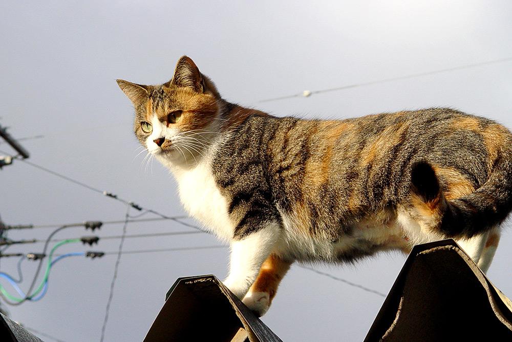 Профилактика должна проводится и для котов, бывающих на улице, и для котов-домоседов