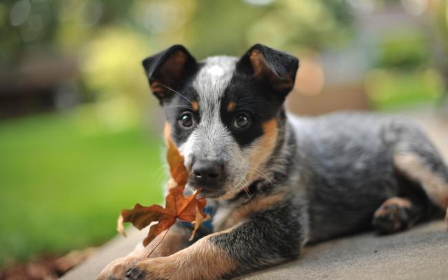 Прохождение щенками медосмотра в первые месяцы жизни позволяет предотвратить распространение заболеваний