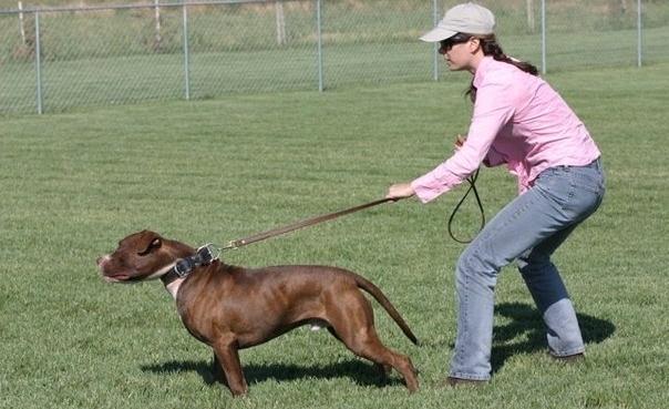 Пёс может справиться со своим влечением, и повиноваться команде хозяина