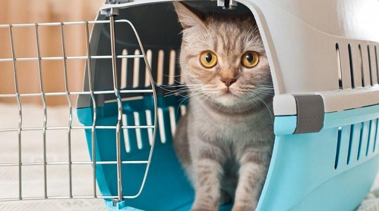 РЧИ кота требуют при въезде в другое государство