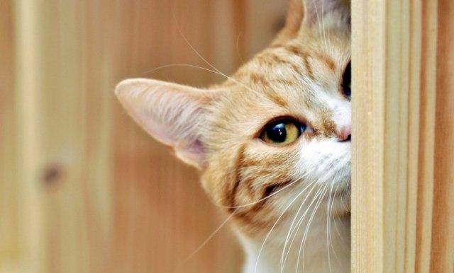 Распознавание кошачьего {amp}quot;нет{amp}quot; поможет хозяину сохранить руки и ноги в целости