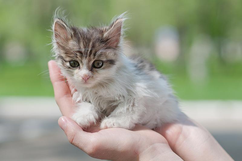 Рацион подобранных котят должен восполнить нехватку питательных веществ в их организме