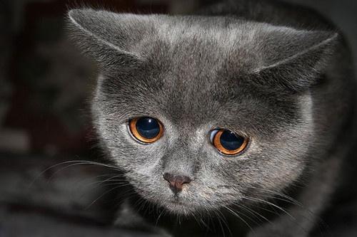 Реакция котёнка на наказание