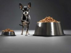 Резкая смена питания может привести к срыву ЖКТ собаки