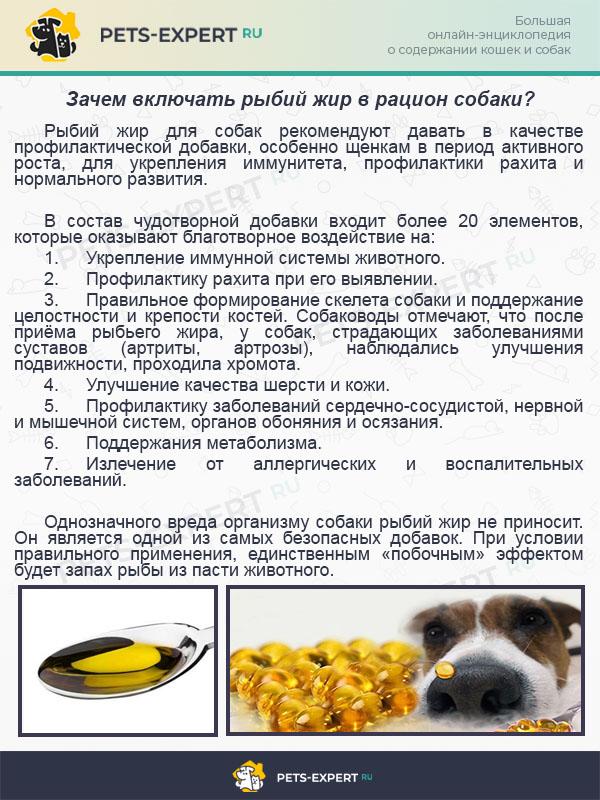 Зачем включать рыбий жир в рацион собаки?
