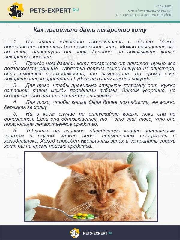 Как правильно дать лекарство коту