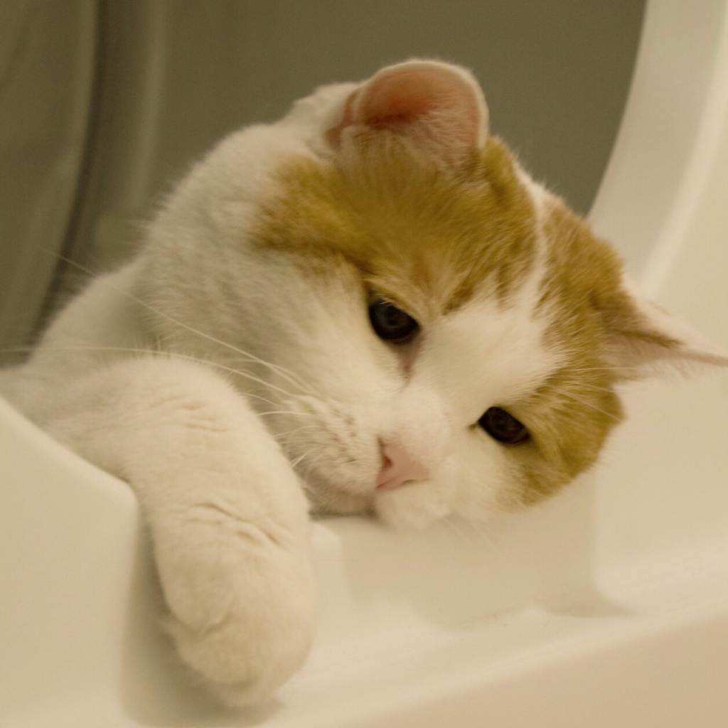 Самый сложный, но и самый правильный выход - достичь взаимопонимания с котом в вопросе границ