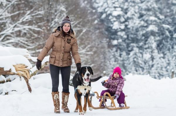 Сегодня швейцарские зенненхунды - это больше семейные собаки