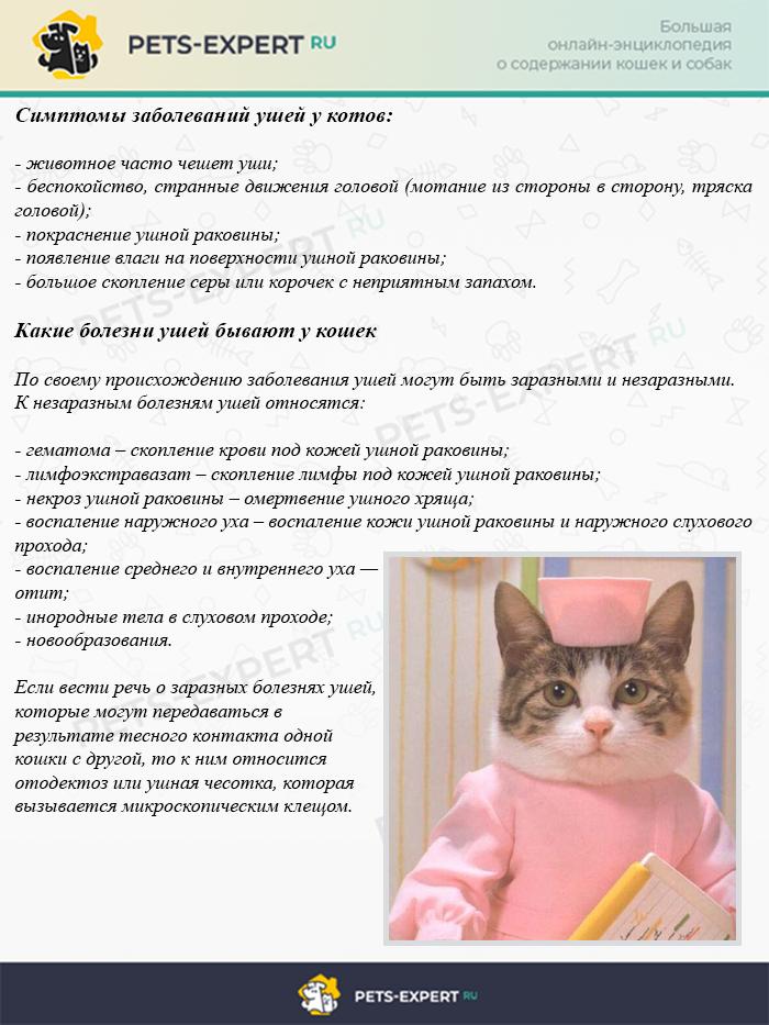 Симптомы заболеваний ушей у котов