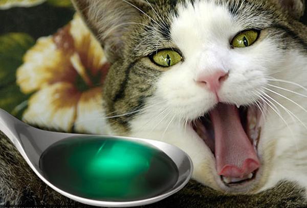 Симптомы отравления у кошек схожи с человеческими