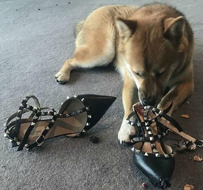 Сина ину любит ботинки