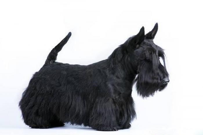 Собака Карандаша