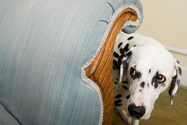 Собака боится гулять на улице, что делать?