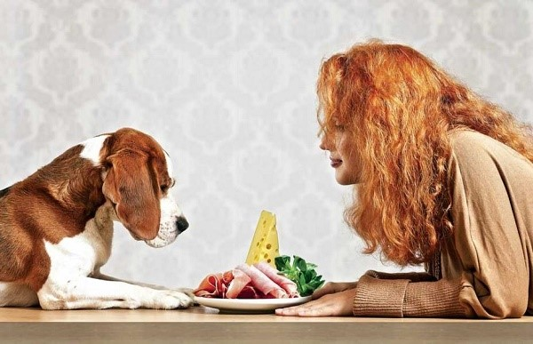 Собака, как и человек, может отравиться испорченными продуктами, или какими-либо токсичными веществами