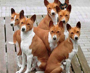 Собака-компаньон
