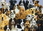 Собаки любых пород