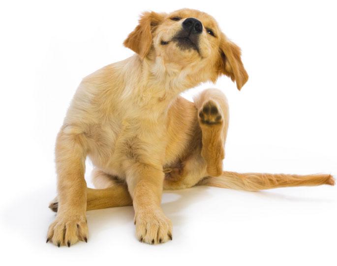 Собаки с проблемами нервной системы могут переносить стресс на физический уровень