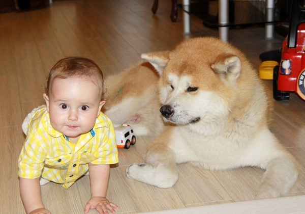 Собаки этой породы будут охранять вашего ребенка, как своего собственного