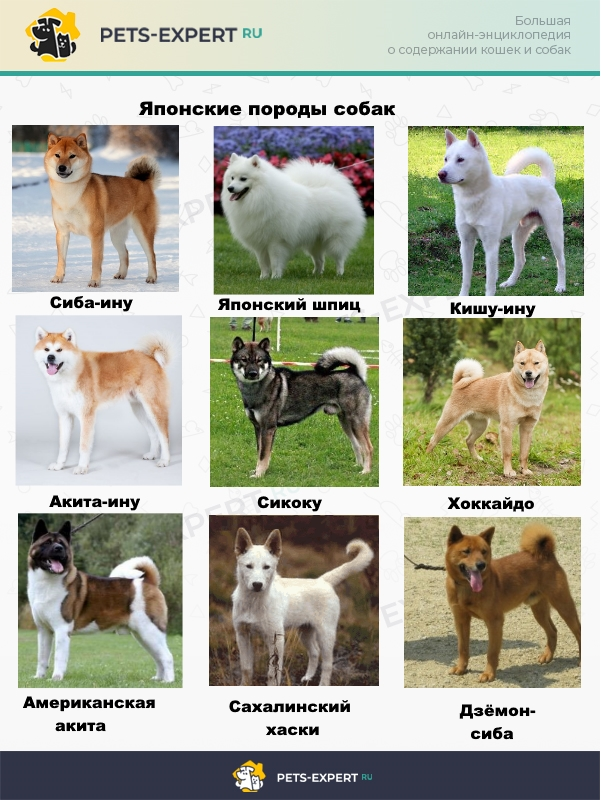 Собаки японских островов
