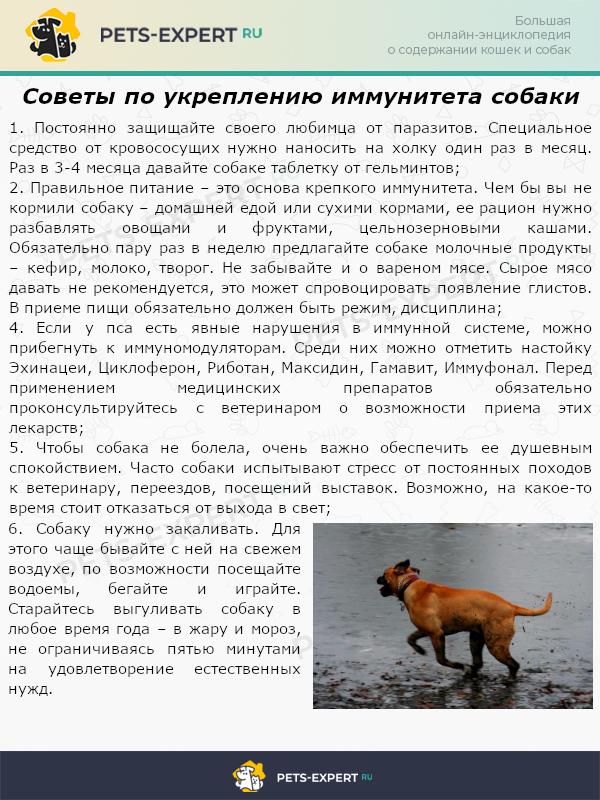 Советы по укреплению иммунитета собаки