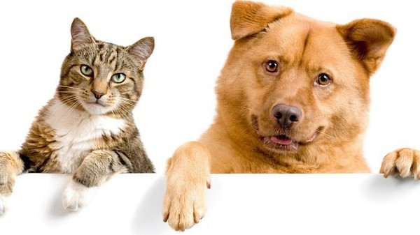 Согласно статистике, собаки намного реже вызывают у человека аллергическую реакцию по сравнению с кошками