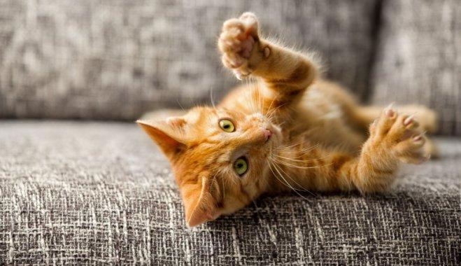 Соизмерение силы во время игры - явно не прерогатива котов