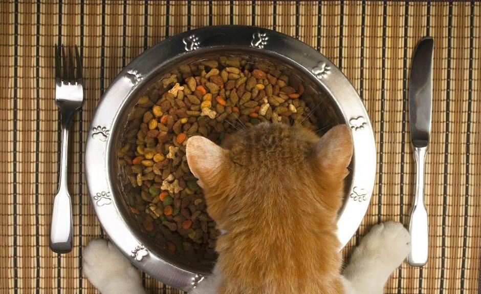 Сочетая разные типы питания, по возможности подбирайте корма одного и того же производителя