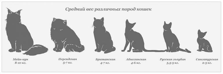 Средний вес различных пород кошек
