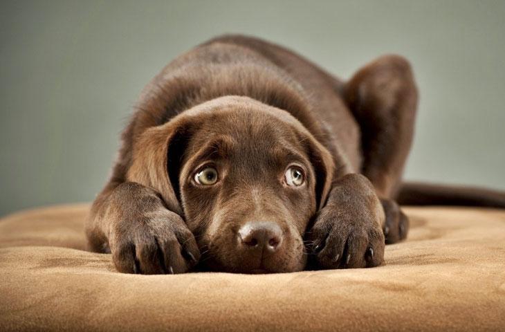 Страх к вечерним прогулкам может возникнуть из-за болезни собаки