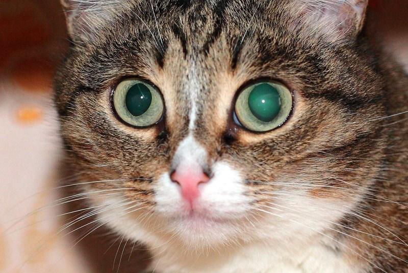 Стресс может стать причиной заболеваний глаз у кошки