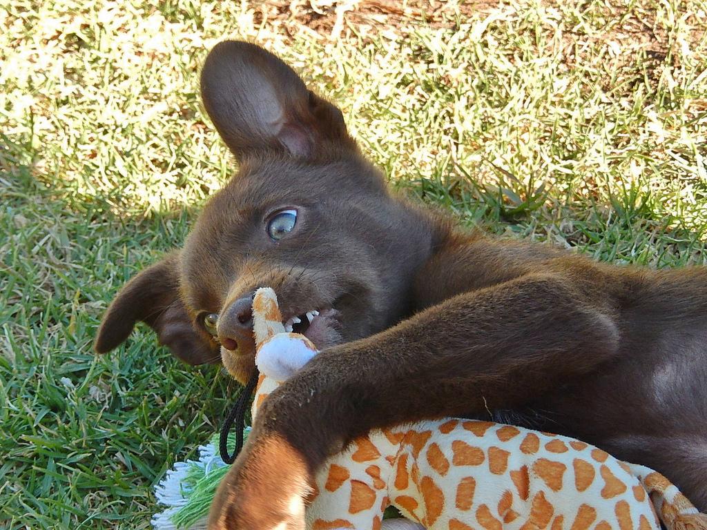 Суспензия, отлично подходящая щенкам до полугода, окажется малополезной для них при взрослении
