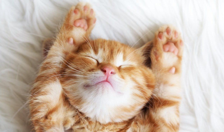Считается, что коты выделяют большее количество аллергенов, чем кошки