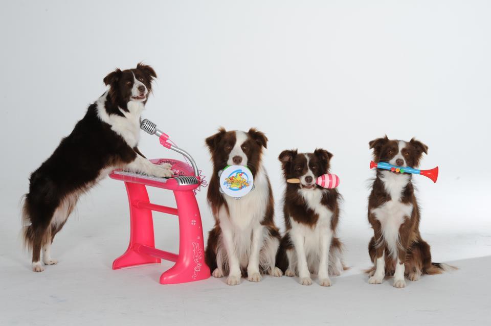 С шести месяцев щенок способен осваивать сложные команды