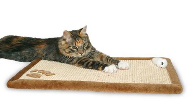 Лучшее место расположения когтеточки там, где кошка чаще всего спит