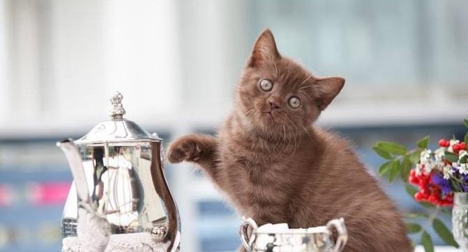 """Твердое """"нет"""" попыткам котенка умыкнуть кусочек со стола спасет его от проблем с ЖКТ"""