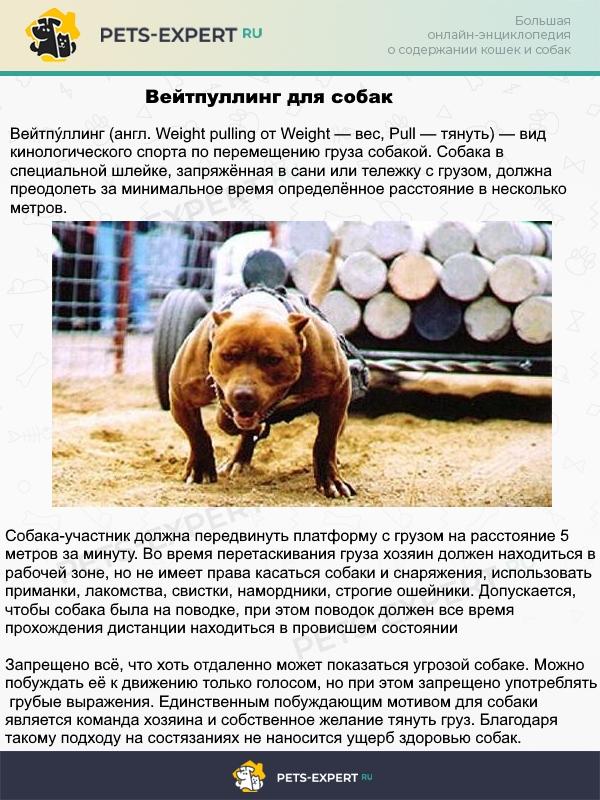 Тяжёлая атлетика для собак