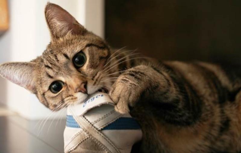 Угрозу могут представлять и уличные ботинки, которыми кот может заинтересоваться