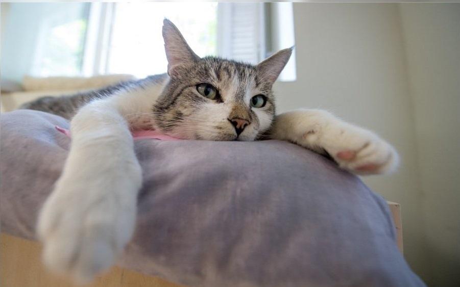 У владельцев кошек возникает много вопросов о чипах