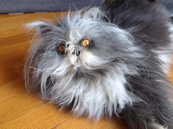 Хозяева котов должны знать, что кошачья шерсть будет даже там, где кота никогда не было