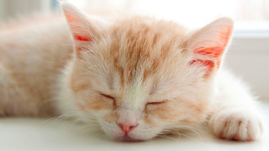 Частая раздражительность кота может указывать на проблемы со здоровьем