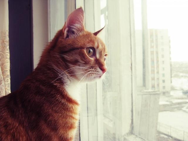 Часто поводом агрессии служит происходящее за окном - будь то упущенная птица или небитый соседский кот