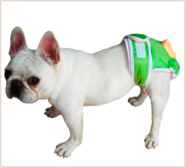 Чаще у породистых собак бывают проблемы с мочевыделительной системой