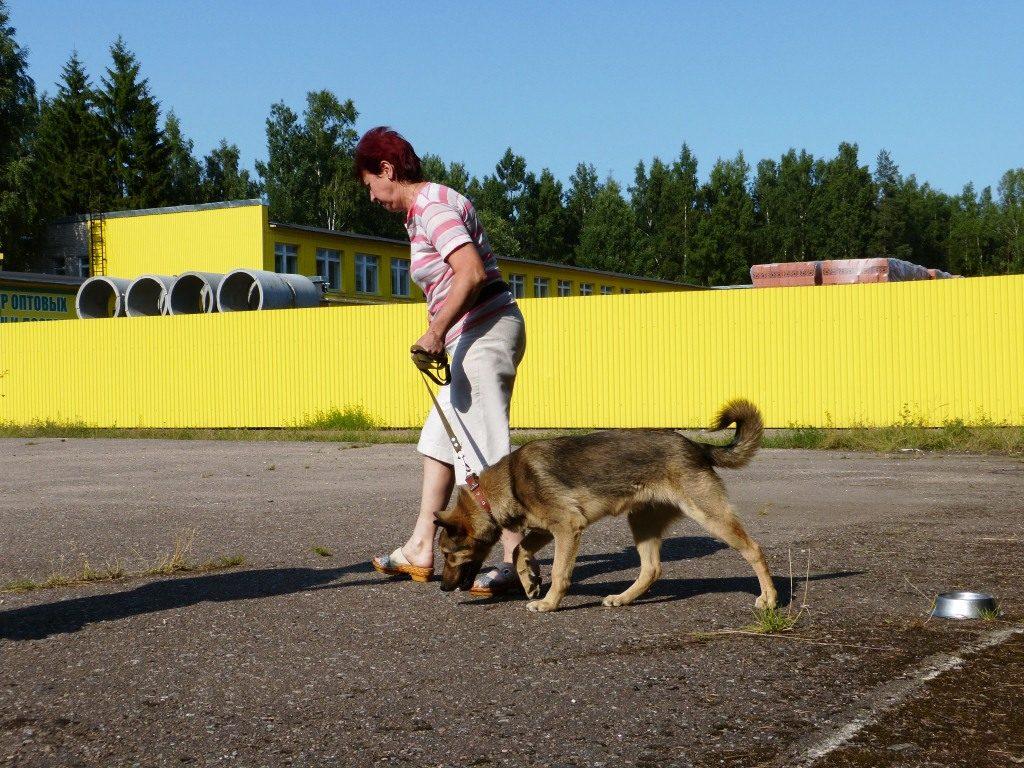 Чтобы собака быстрее поняла команду, хозяин должен сам продемонстрировать действие