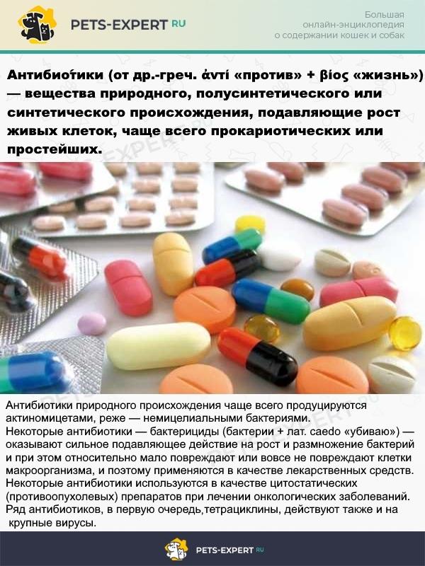 Что такое антибиотики и какими они бывают